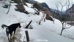 dog walking on snow trail during winter to pulga