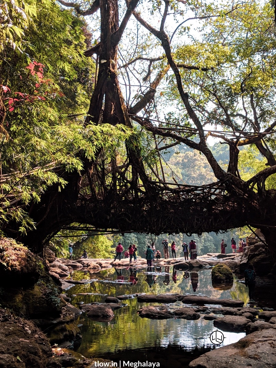 Riwai root bridge