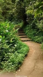 iruppu-falls-path-walking-trail
