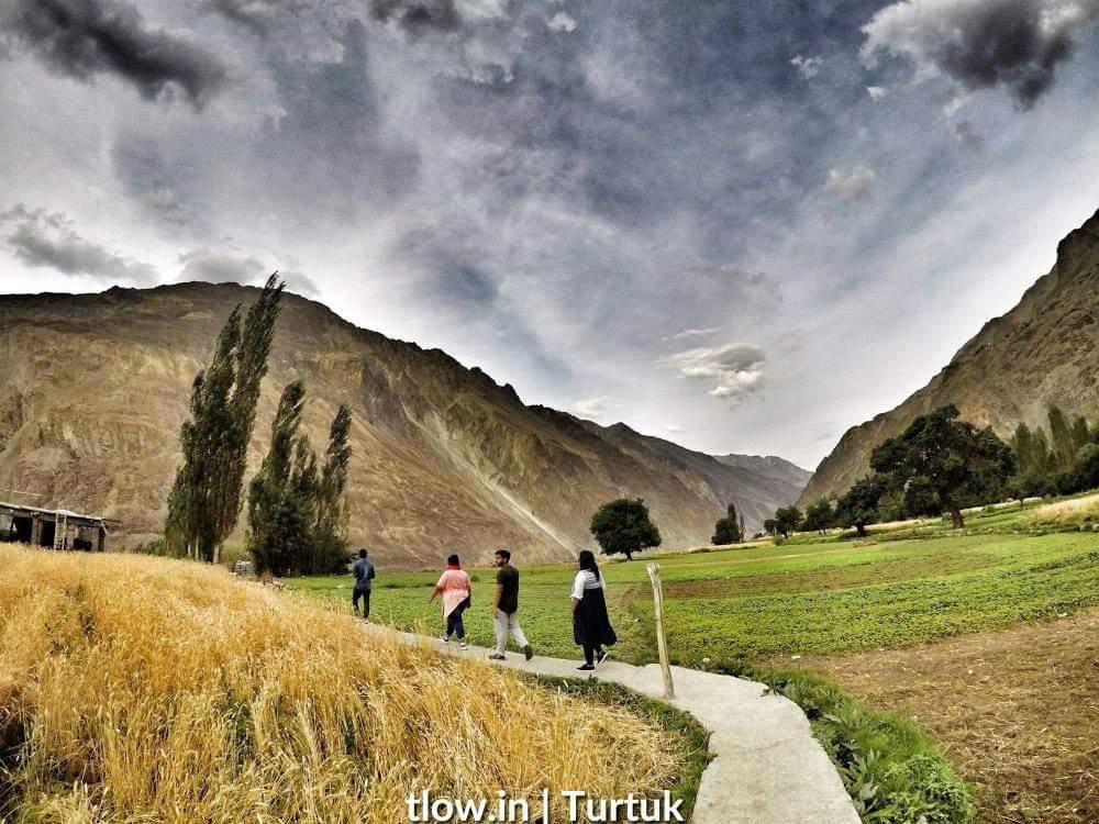 Turtuk fields