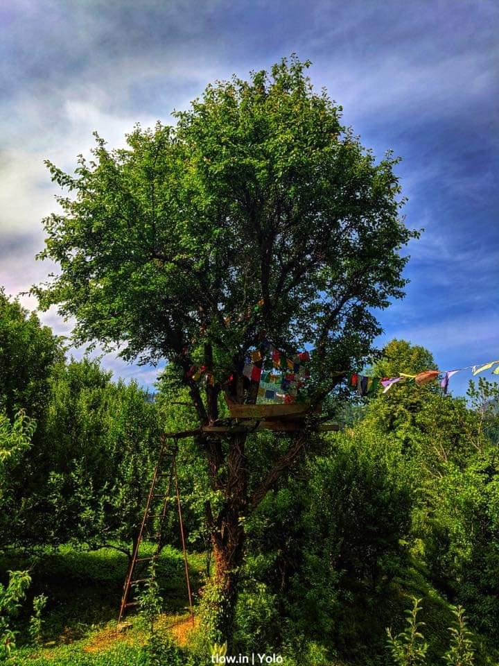 Tree house at Yolo