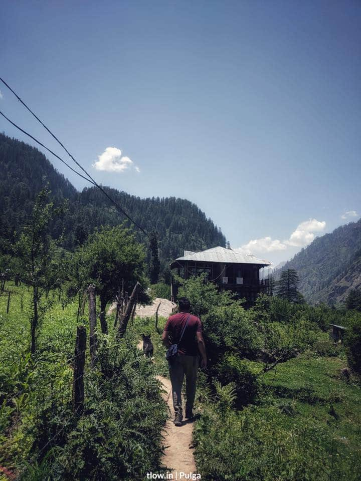 Hike to the forest in Pulga