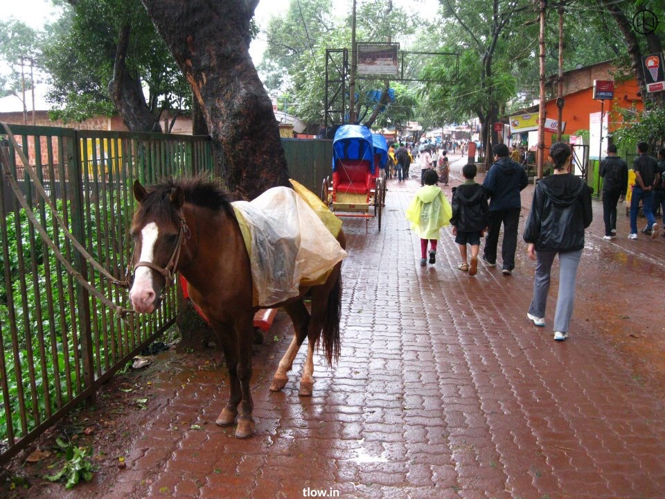 Poney in Matheran