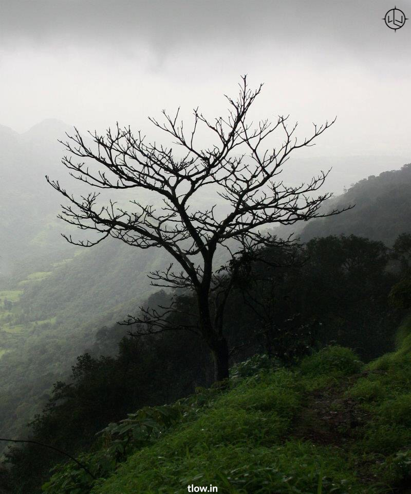 One tree hill Matheran